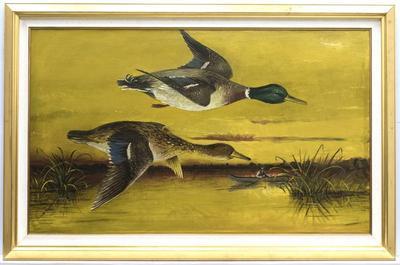 Mallard Ducks Over the Grand River
