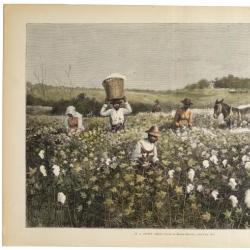 In a Cotton Field