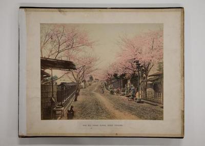 Noge Hill Cherry Flower, Street Yokohama (inside front cover)
