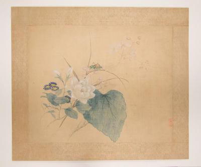 Grasshopper, Flowers and Grasses