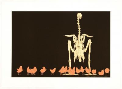 Domestic Cock 'Gallus gallus'
