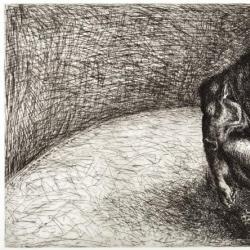Minotaur as Yearling