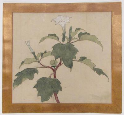 White Flowering Plant