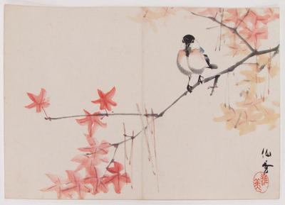 Bird on a Maple Branch
