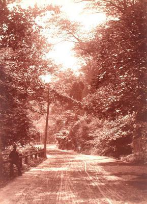 Woodland Road, Eastern U.S.