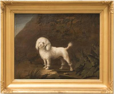 Standing Poodle